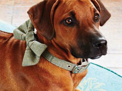 První český couture & design e-shop pro psy otevřel své brány