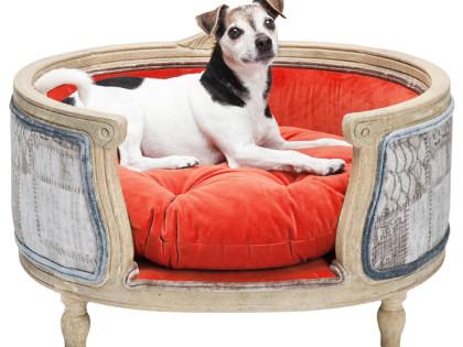DOGG představuje psí postele snů