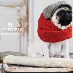 Love My Dog. Exkluzivní móda pro psy v prodeji na DOGG.CZ