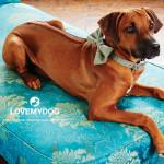 Ridgeback Keva má na sobě luxusní obojek a motýlek z kolekce Digby. K dispozici na DOGG.CZ