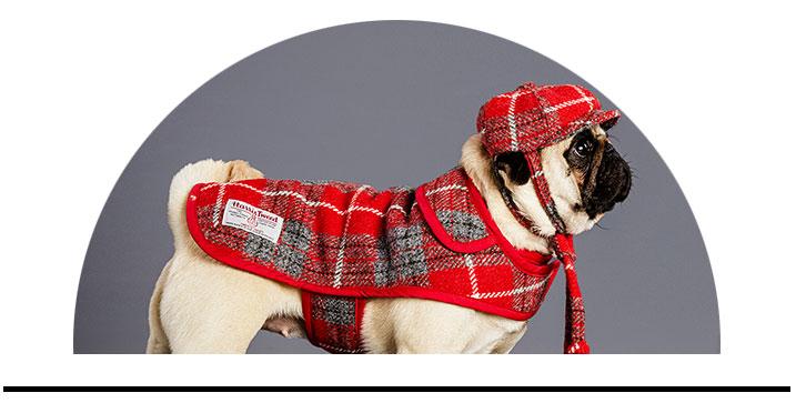 Čepice pro psy