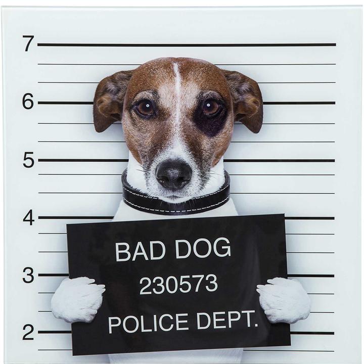 Obraz Bad Dog Jack Russel