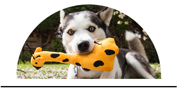 Hračky pro psy bezpečné eko přírodní logické hry pro psy