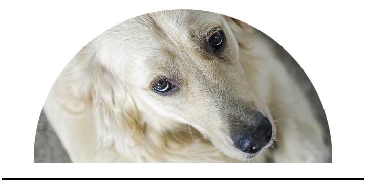 Spreje kondicionéry pro psy