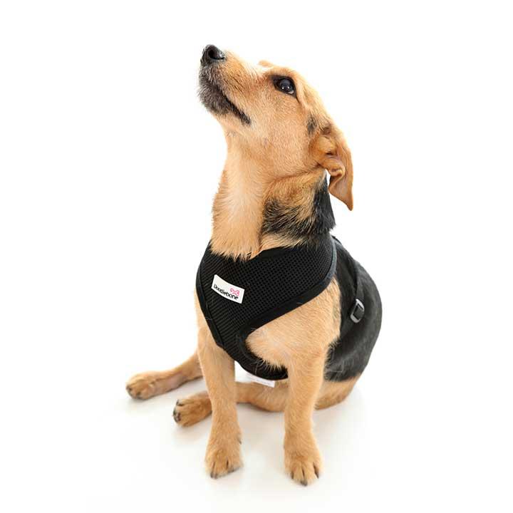 Postroj Airmesh Black pro psy pre psov Doodlebone