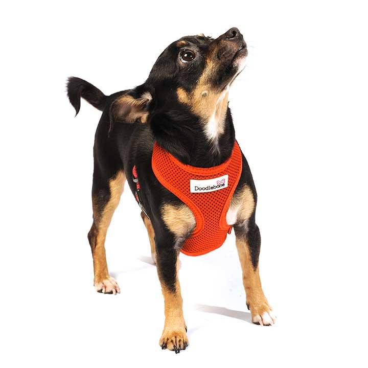 Postroj Airmesh Orange pro psy pre psov Doodlebone