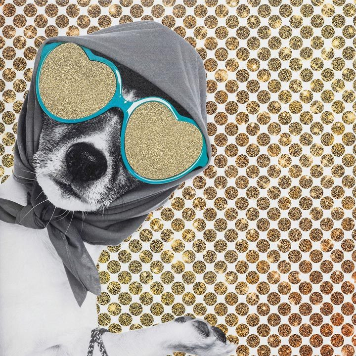 Obraz Lady Dog jack russell teriér