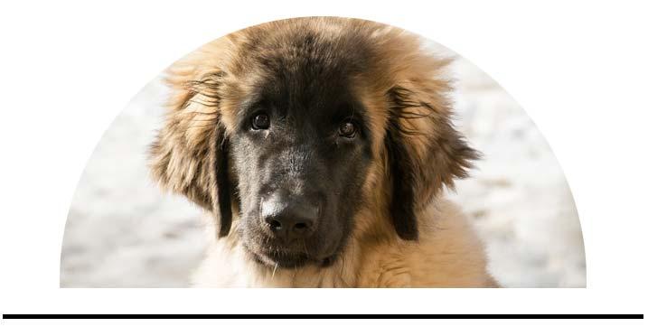 Hřebeny kartáče pro psy