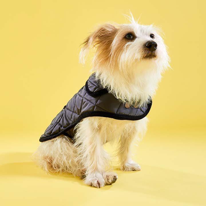 Kabát New Elwin Navy luxusní obleček pro psy LoveMyDog