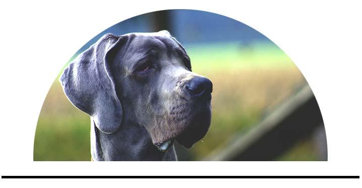 Parfémy pro psy vůně deodoranty prostředky proti zápachu psa