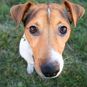 Jaké jsou naše nejprodávanější vychytávky pro psy roku 2017?