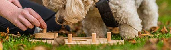 Doglog logické hry hlavolamy pro psy