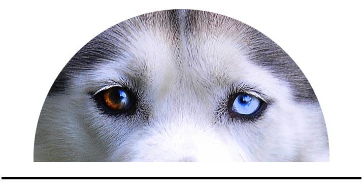 Péče o oči a uši psů
