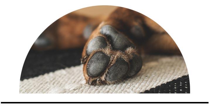 Péče o tělo tlapky rány psů
