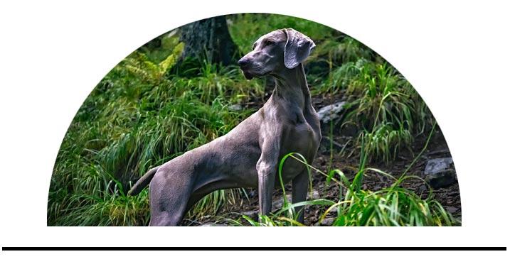 Ochrana psů klíšťata blechy přírodní bez chemie kočky