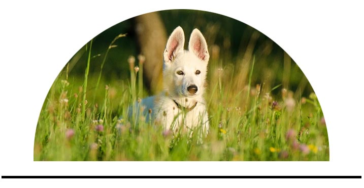 Bylinky řasy doplňky stravy pro psy přírodní