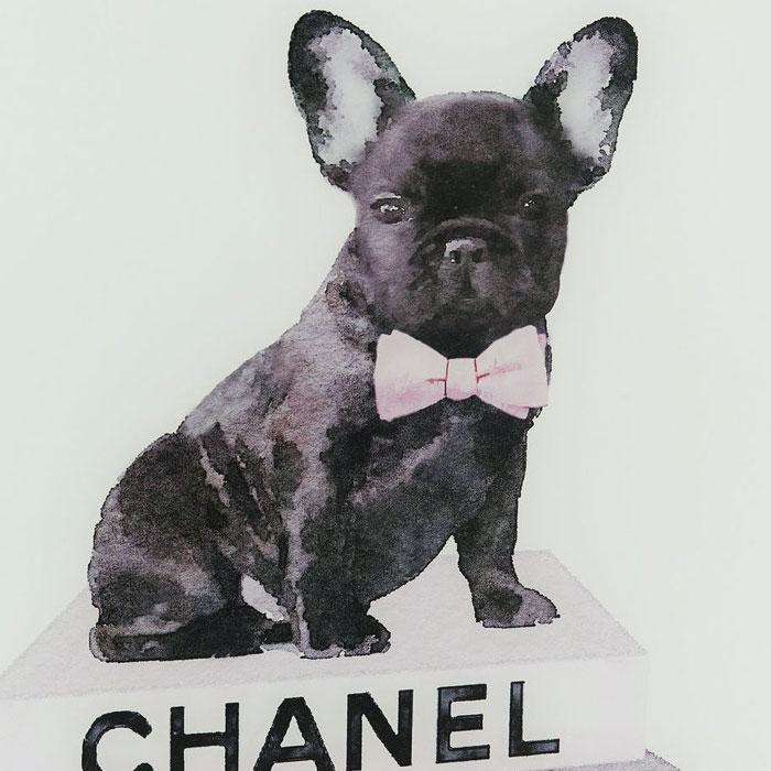 Skleněný obraz Fashion Dog francouzský buldoček