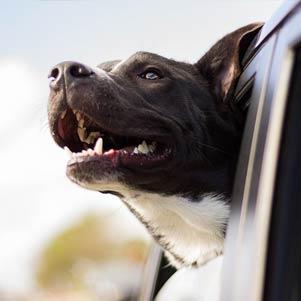 Cestujeme se psem: Co sbalit psovi do kufru na dovolenou