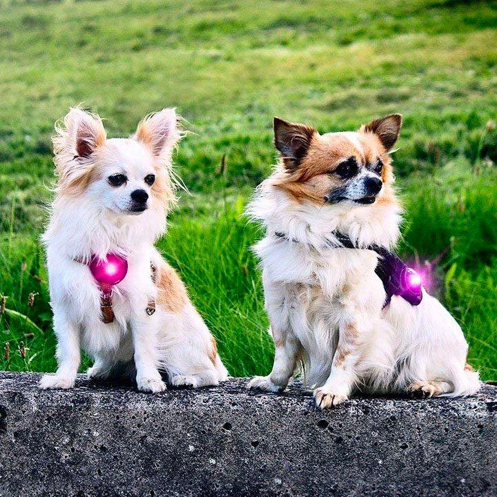 Orbiloc Pink LED světlo na obojek pro psy
