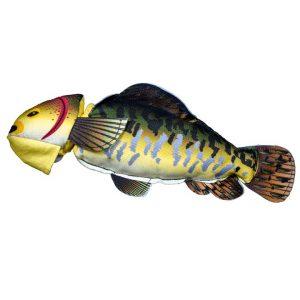 Ryba na aportování