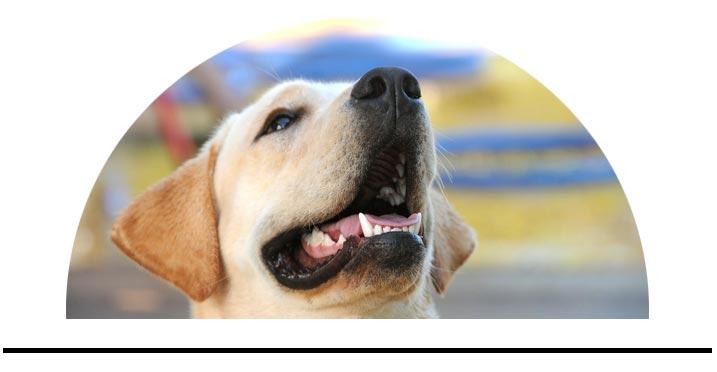 Péče o zuby a dásně psů zápach z tlamy plak