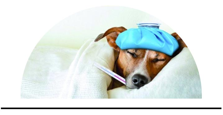 Lékárna pro psy