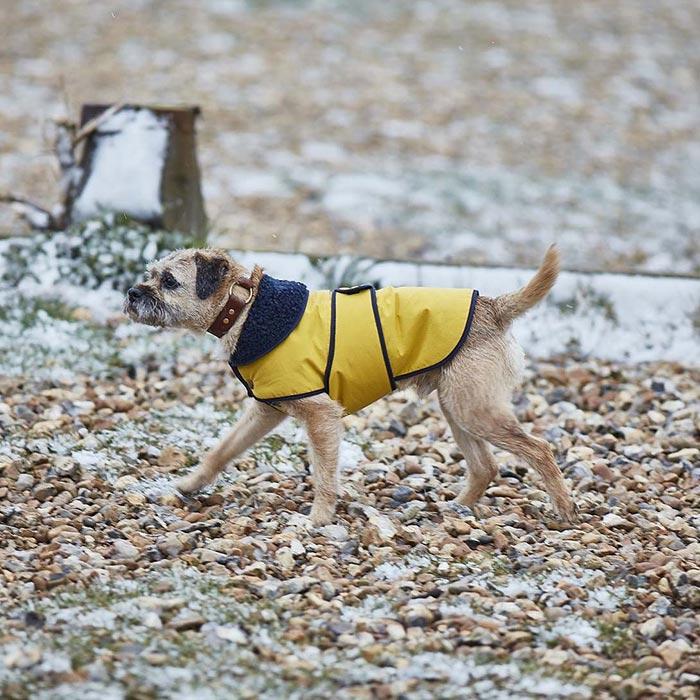 Kabát Sunshine Yellow luxusní obleček pro psy