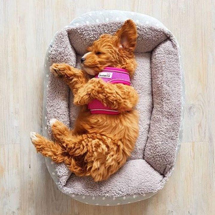 Postroj pro psy módní Doodlebone Airmesh Snappy vestička pro psa