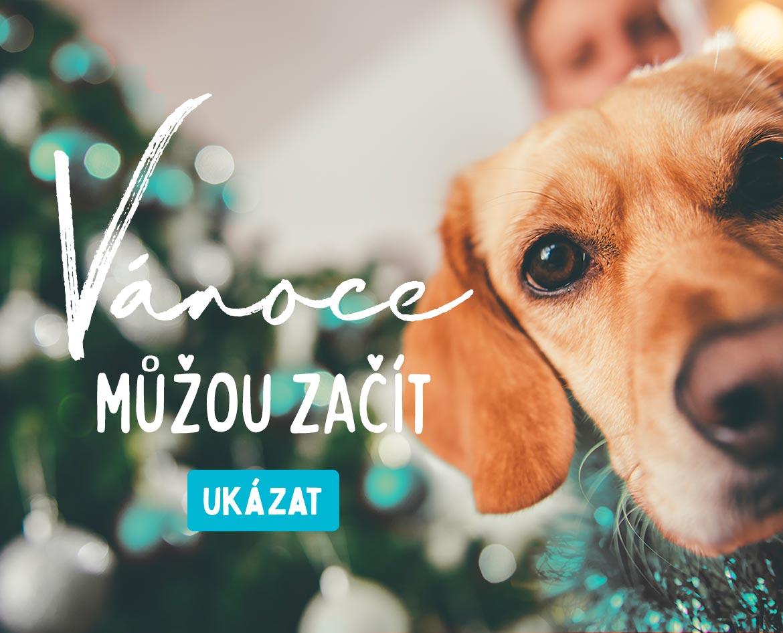 Vánoční dárky pro psy