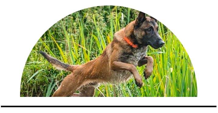 Obojky pro psy do vody odolné