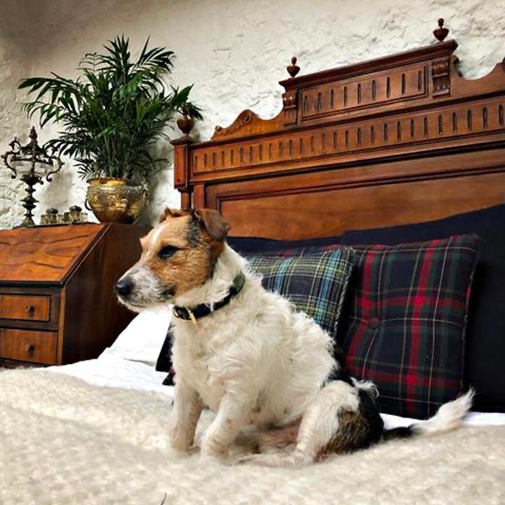 Obojek Arnold Sage Green luxusní obojek pro psy