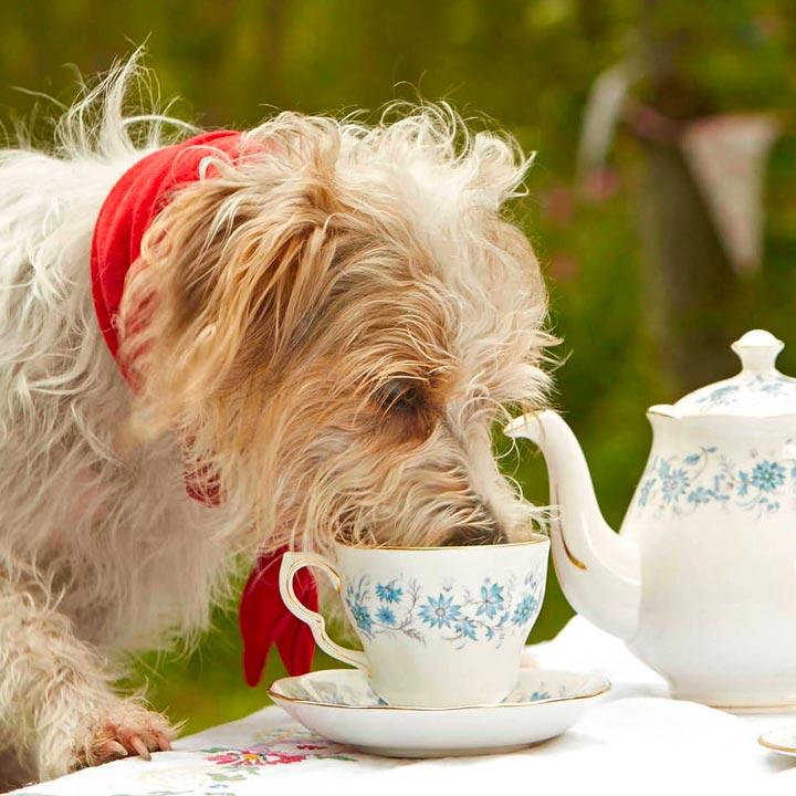 Woof & Brew Bylinné čaje pro psy