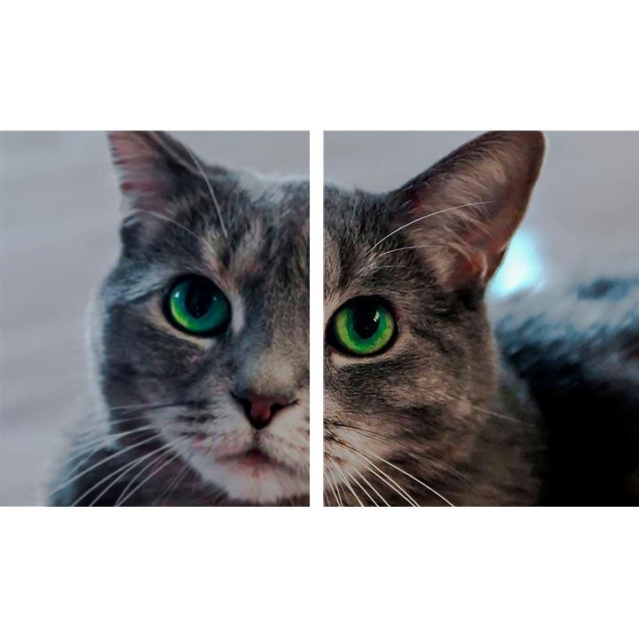 Xiaomi Mi Kamera pro psy a kočky