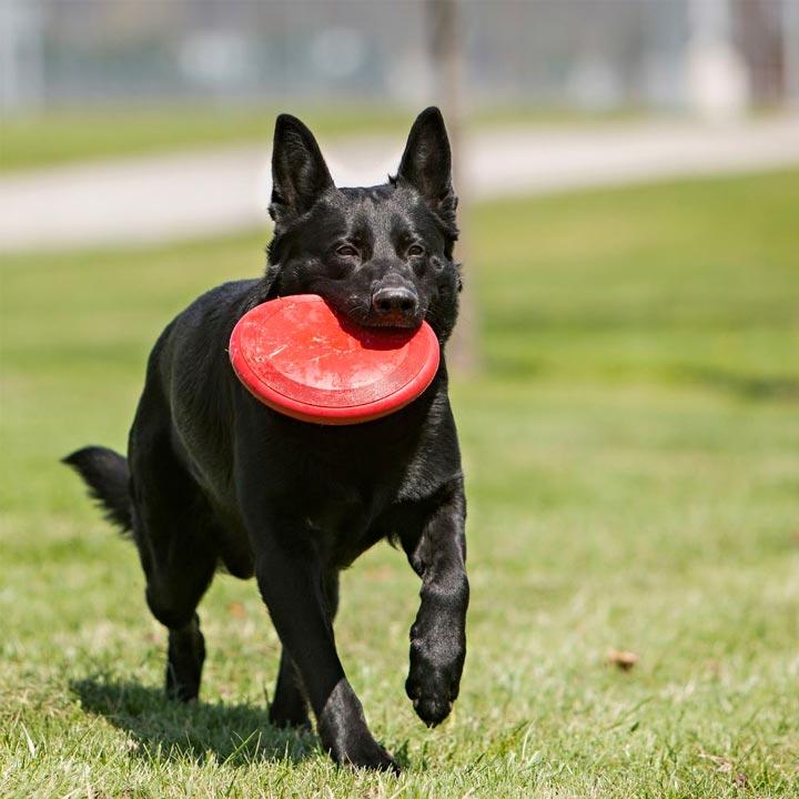 Nezničitelný Kong Flyer pro malé a střední psy