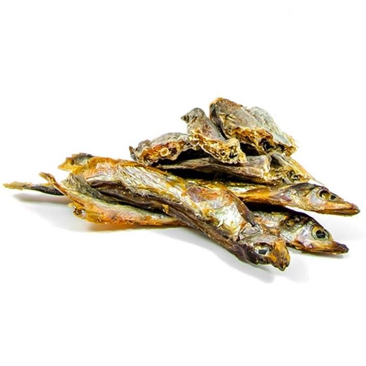 4nohy Uschlá mořská rybka