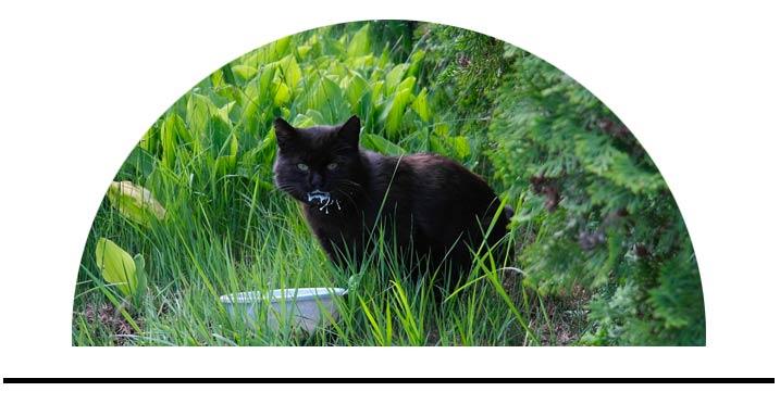 Doplňky výživy pro kočky