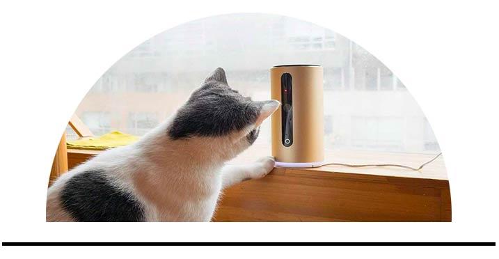 GPS, kamery a smart pro kočky