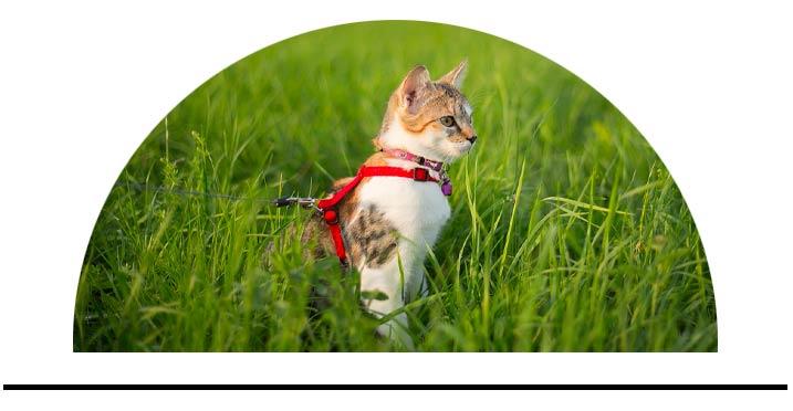 Hands-free vodítka pro kočky