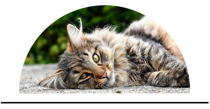 Proti klíšťatům a blechám pro kočky antiparazitní