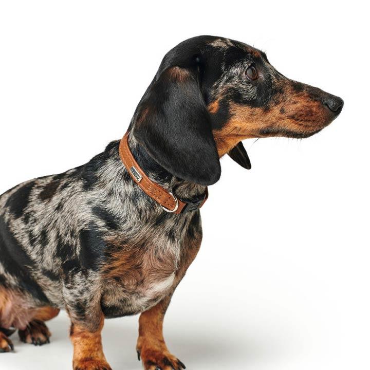 Hunter Obojek pro malé psy Canadian Petit Cognac luxusní kožený