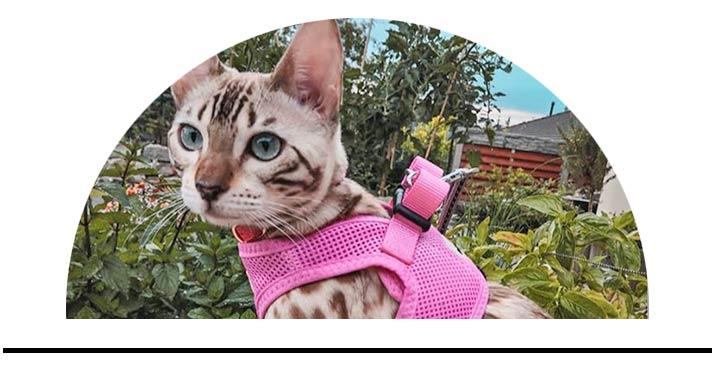Postroje kšíry pro kočky