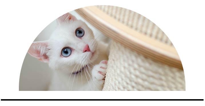 Vybavení pro kočky