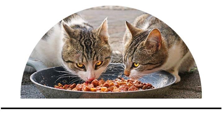 Zdravé jídlo pro kočky