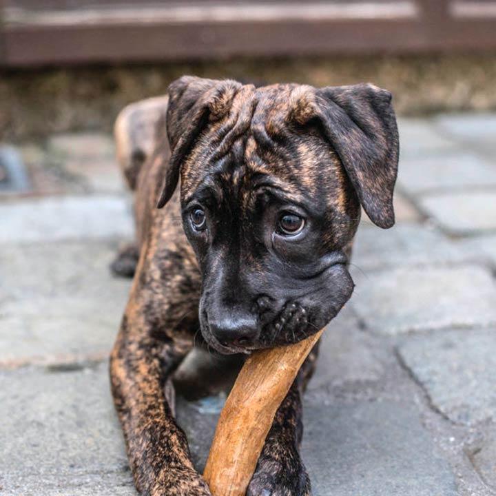 Chewies Kávové dřevo pro psy