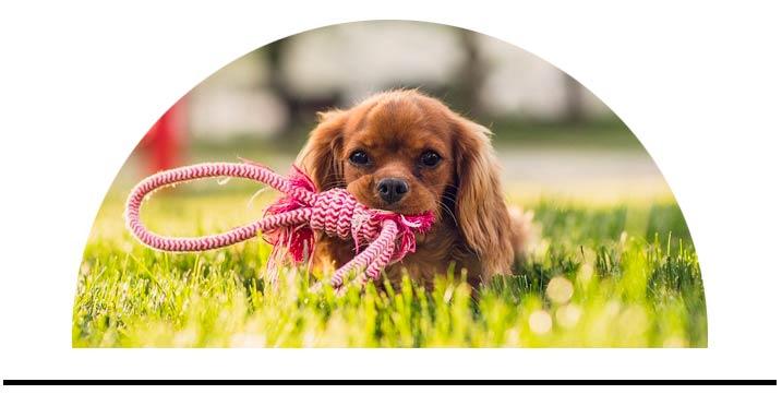 pes žluté vypálené skvrny na trávníku