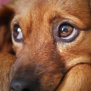 3 vychytávky, jak uklidnit psa na Silvestra