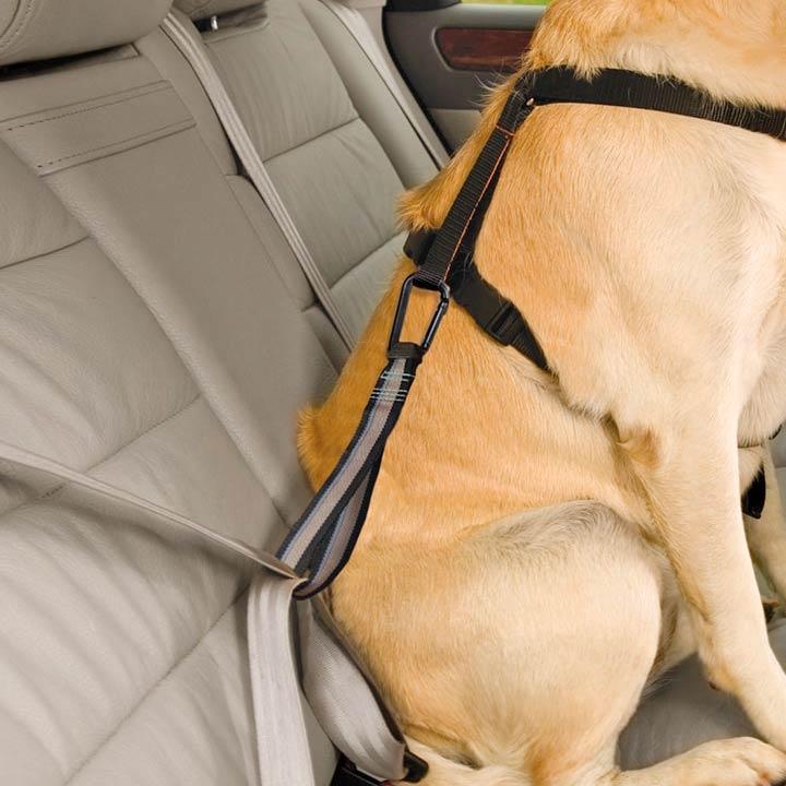 Kurgo Bezpečnostní pás do auta pro psy s ouškem