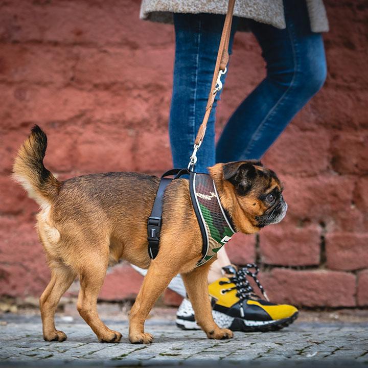 Postroj kšíry pro psa Doodlebone Airmesh