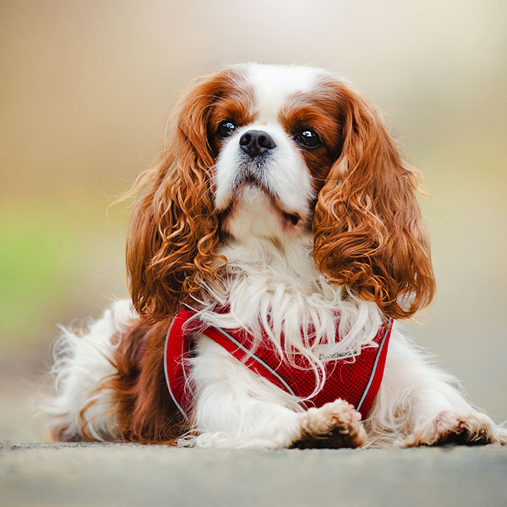 Postroj kšíry pro psa Doodlebone Airmesh Snappy
