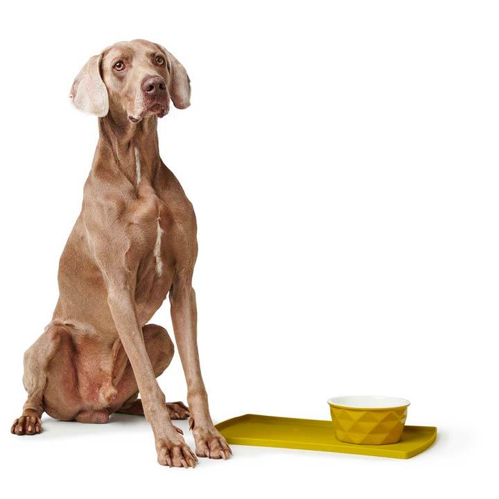 Hunter Keramická miska Eiby Yellow pro psy